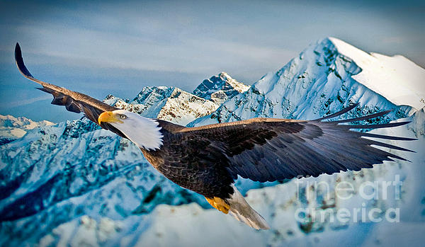 Soaring Bald Eagle Print by Gary Keesler