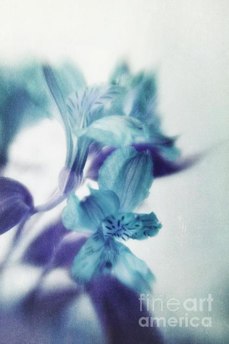 Soft Blues Print by Priska Wettstein