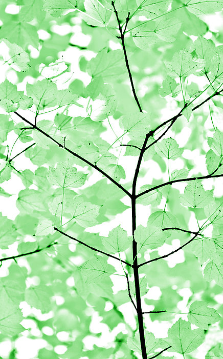 Soft Green Leaves Melody Print by Jennie Marie Schell