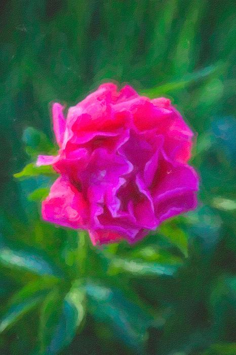 Soft Pink Peony Print by Omaste Witkowski