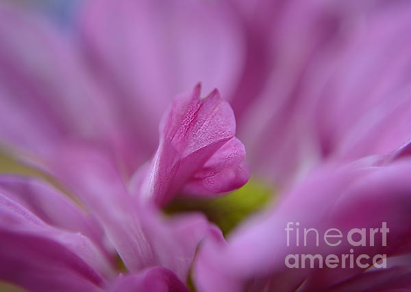 Soft Purple Print by Michelle Meenawong