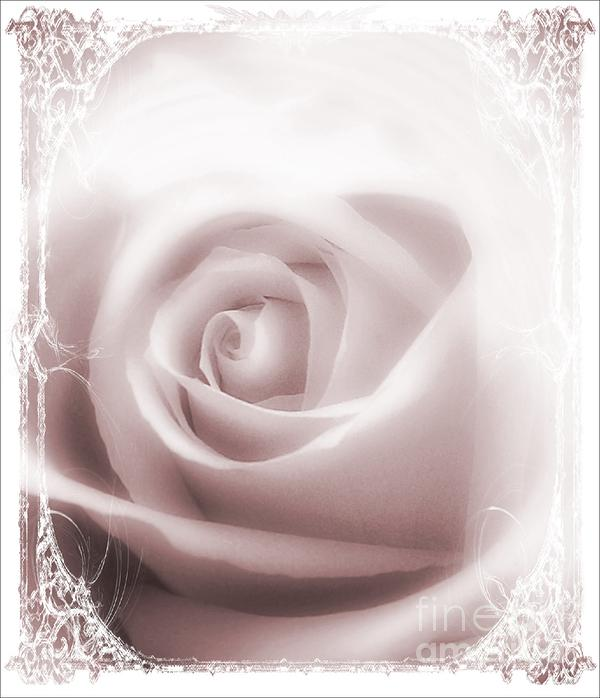 Soft Rose Print by Michelle Frizzell-Thompson