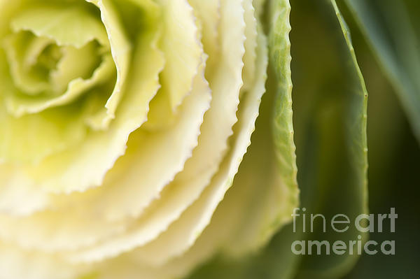 Softly Green Print by Anne Gilbert