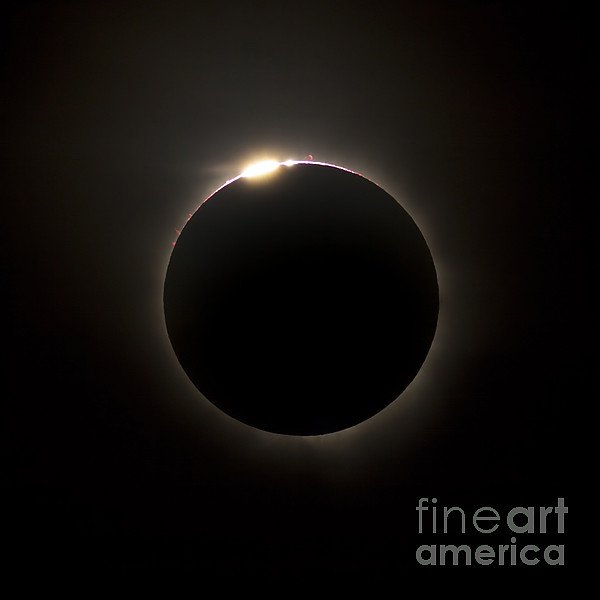 Solar Eclipse With Prominences Print by Philip Hart