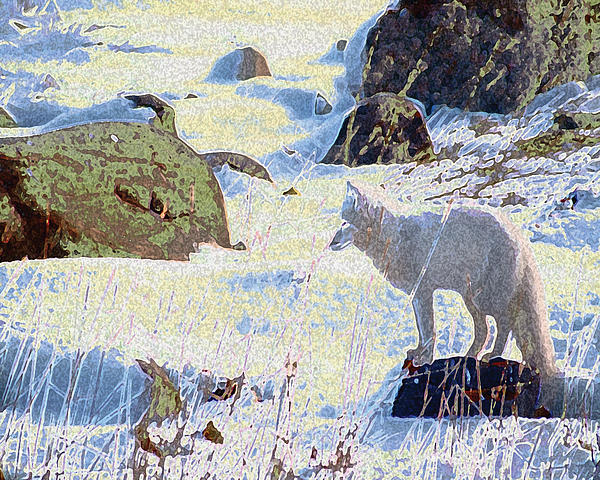 Solitary Fox Print by Alice Ramirez