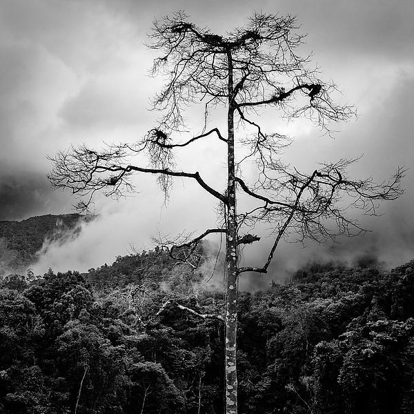 Solitary Tree Print by Dave Bowman