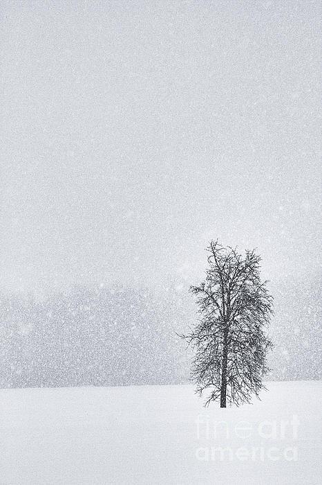 Solitude II Print by Michele Steffey