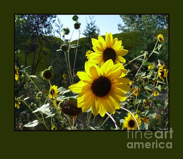 Song Of The Sunflower Print by Jacquelyn Roberts