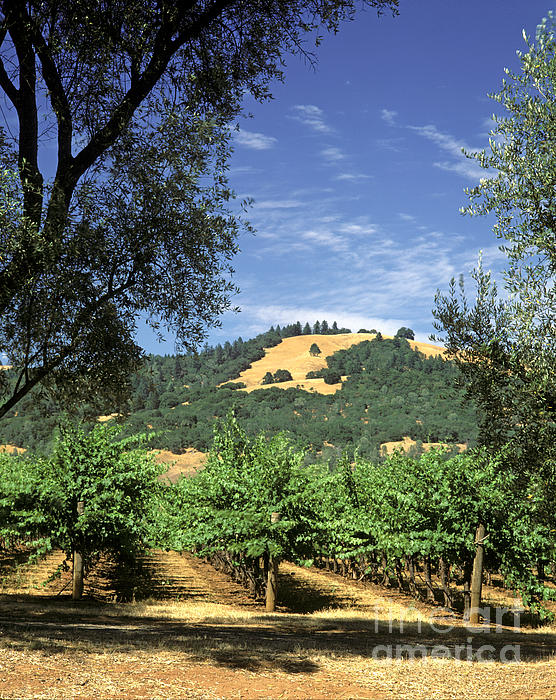Sonoma Valley Vineyard Print by Craig Lovell