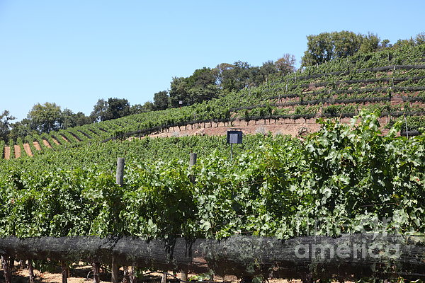 Sonoma Vineyards In The Sonoma California Wine Country 5d24503 Print by Wingsdomain Art and Photography
