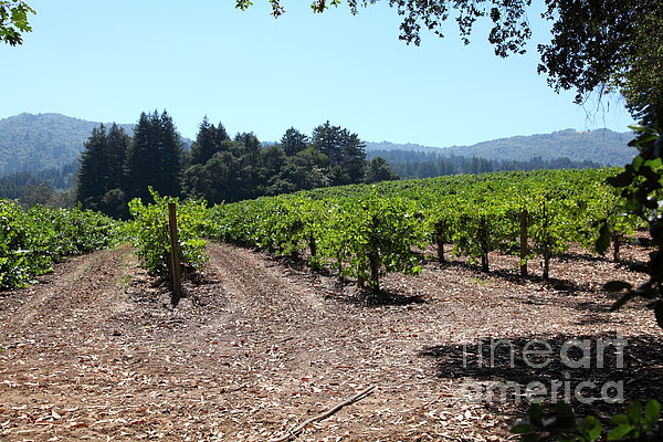 Sonoma Vineyards In The Sonoma California Wine Country 5d24511 Print by Wingsdomain Art and Photography