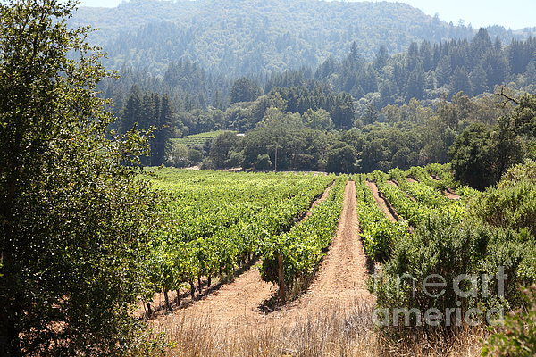 Sonoma Vineyards In The Sonoma California Wine Country 5d24515 Print by Wingsdomain Art and Photography