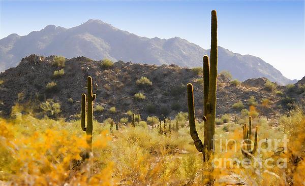 Sonoran Desert Beauty Print by Betty LaRue