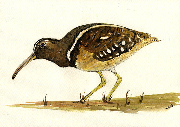 South American Painted Snipe Print by Juan  Bosco