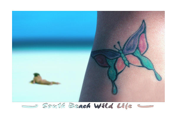 South Beach Wild Life Print by Mike McGlothlen