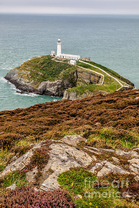 South Stack Lighthouse Print by Adrian Evans