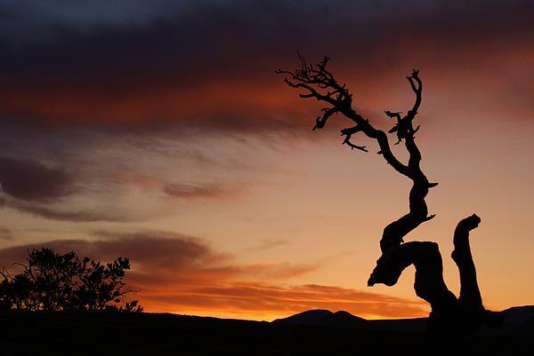 Southwest Tree Sunset Print by Michael J Bauer
