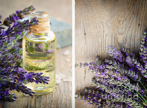 Spa With Lavender  Print by Mythja  Photography