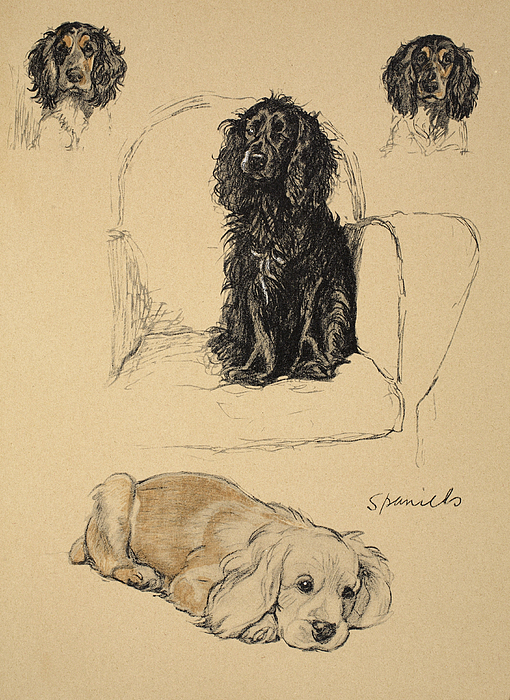 Spaniels, 1930, Illustrations Print by Cecil Charles Windsor Aldin