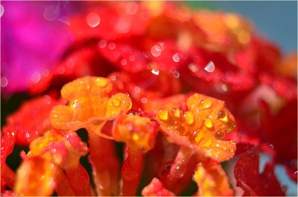 Sparkling Jeweltone Floral II Print by Debbie Portwood