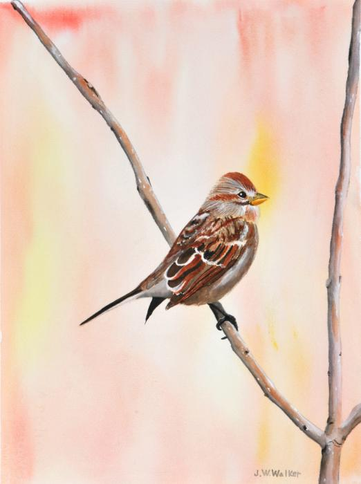 Sparrow I Print by John W Walker