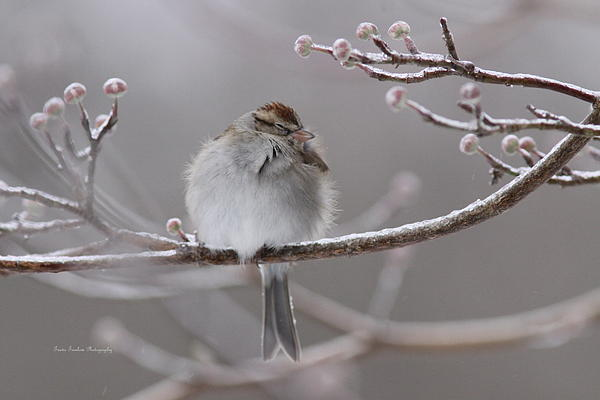 Travis Truelove - Sparrow - Winter - Cool but Cozy