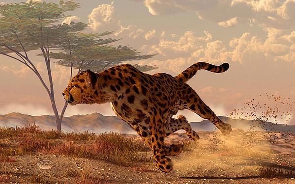 Speeding Cheetah Print by Daniel Eskridge