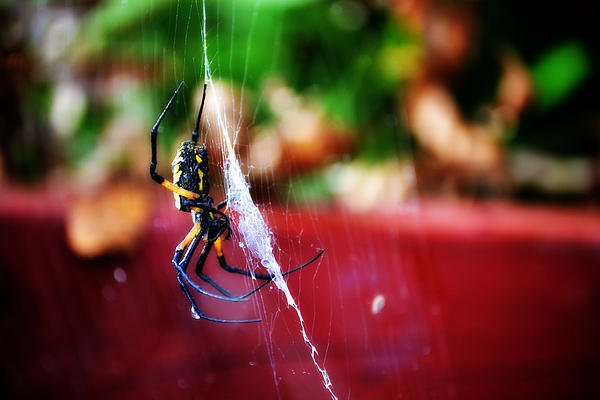 Spider And Web Print by Adam LeCroy