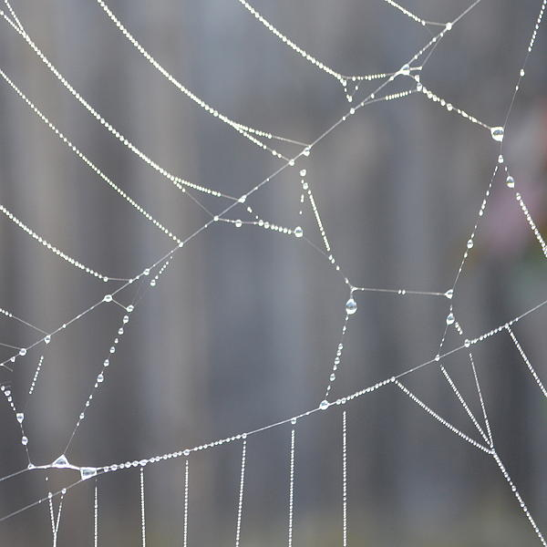 Spider Web In Rain Print by Cheryl Miller