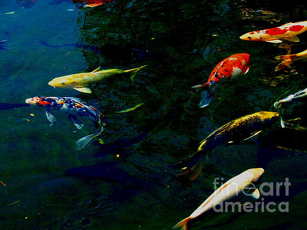 Splash Of Color Print by Greg Patzer