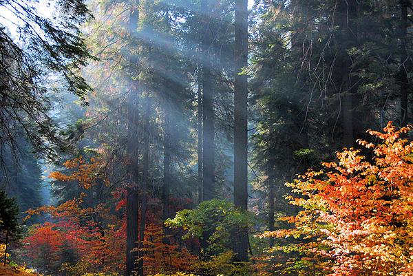 Spotlight On Autumn Print by Lynn Bauer