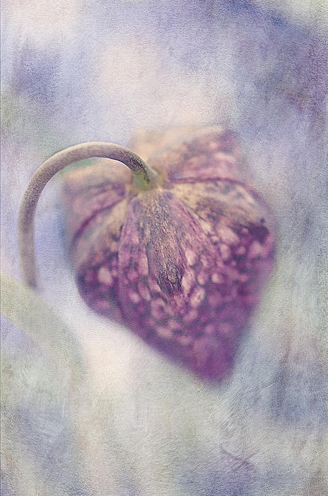 Spotted Beauty Print by Faith Simbeck