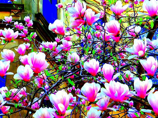 Spring Blossoms Print by Ed Weidman