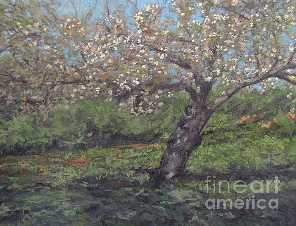 Spring Cherry Blossoms Print by Gregory Arnett