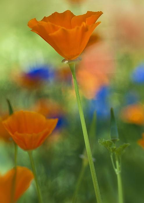 Saija  Lehtonen - Spring Colors