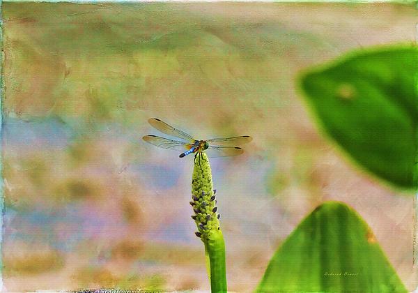 Spring Damsel Print by Deborah Benoit