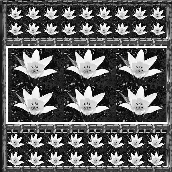 Navin Joshi - Spring Flowers    NavinJOSHI artists puts immense hard work and presenting the basic nature photogra