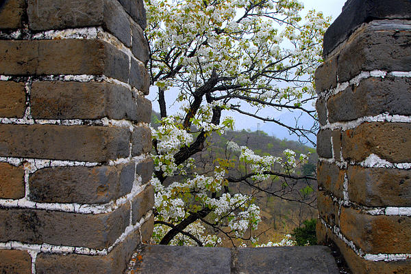 Spring Flowers At The Great Wall Print by Larry Moloney
