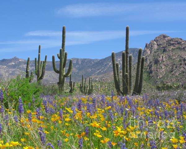 Spring Flowers In The Desert Print by Elvira Butler
