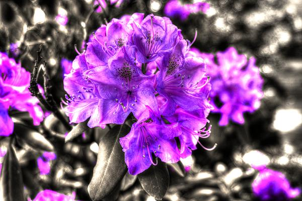 Spring Flowers Print by Mark Alexander