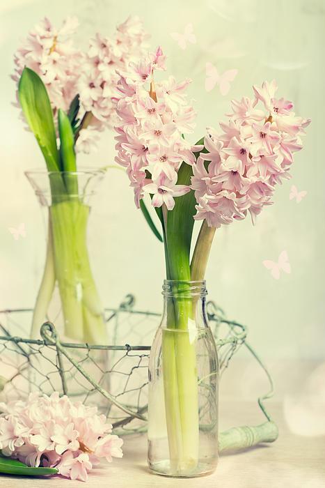 Spring Hyacinths Print by Amanda And Christopher Elwell