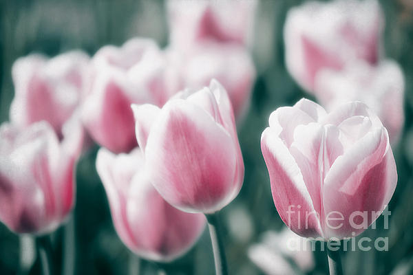 Spring In Love Print by Angela Doelling AD DESIGN Photo and PhotoArt