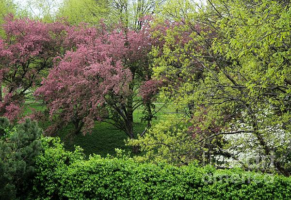 Spring In St. Louis Print by Theresa Willingham