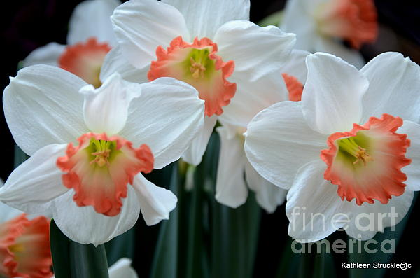 Spring Jonquils Print by Kathleen Struckle
