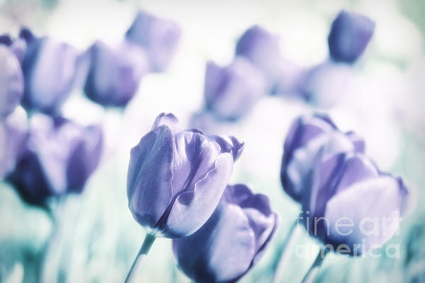Spring Love II Print by Angela Doelling AD DESIGN Photo and PhotoArt