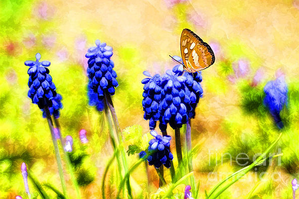 Spring Magic Print by Darren Fisher