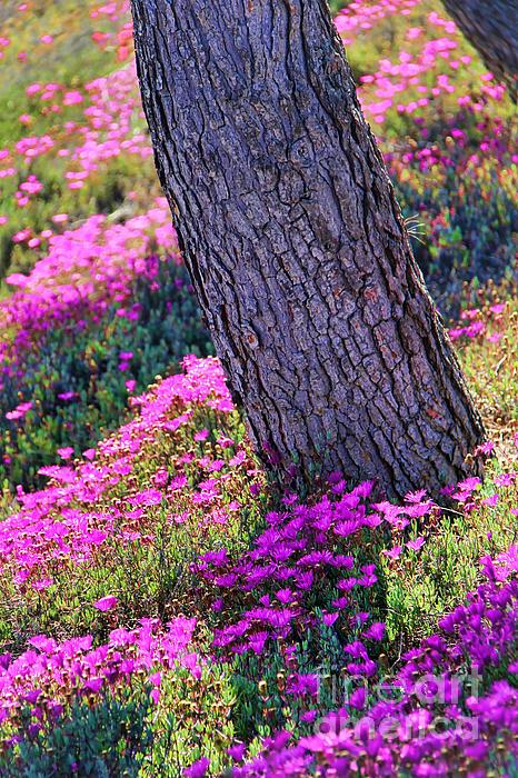Spring Meadow Print by Mariola Bitner