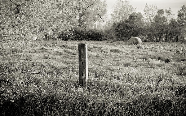 Spring Post And Bale In Black N White Print by Tracy Salava