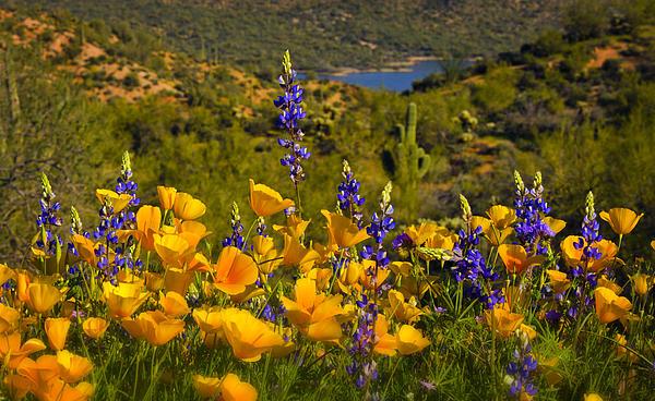 Saija  Lehtonen - Spring Southwest Style