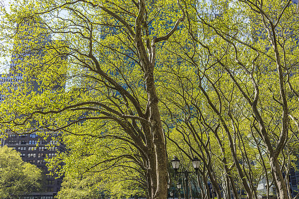 Spring Time In Bryant Park New York Print by Angela A Stanton